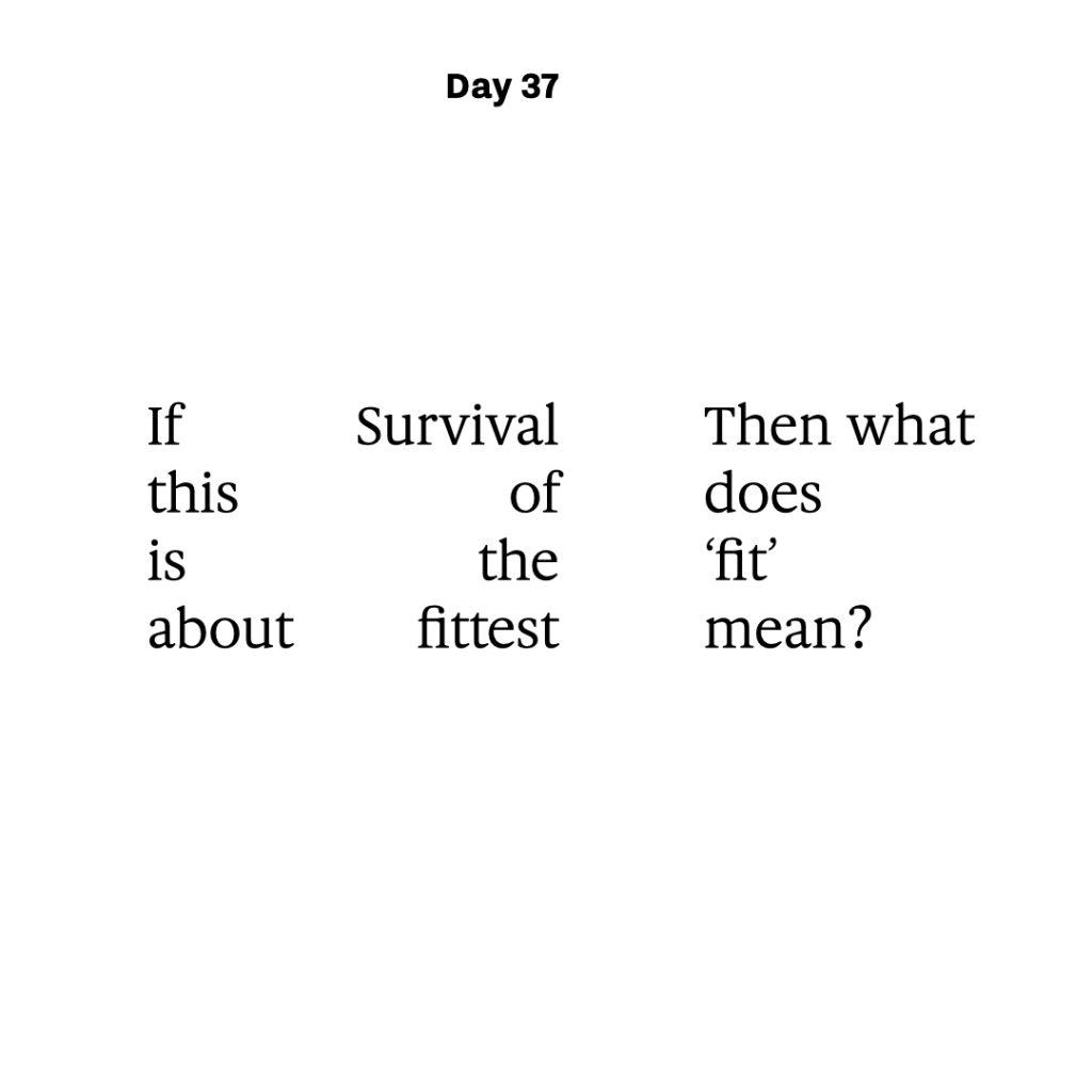 Haiku day 37