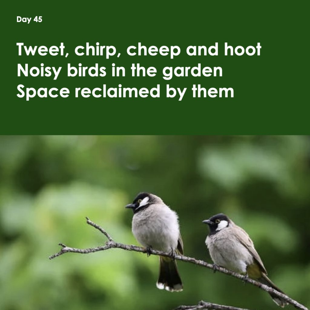 Haiku day 45